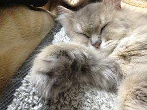 ココちゃん寝顔