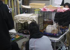 3月8日相模原譲渡会2