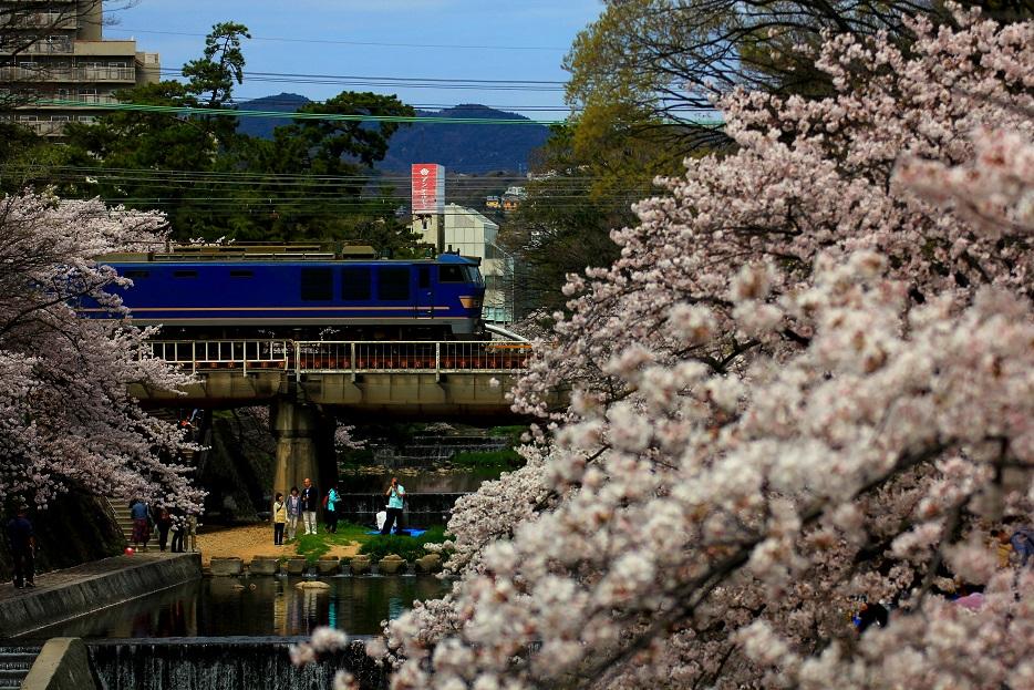 さくら夙川-芦屋
