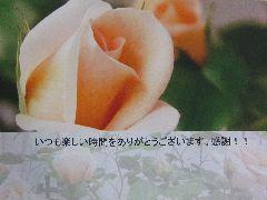 150622 ポストカード(バラ・琴音)