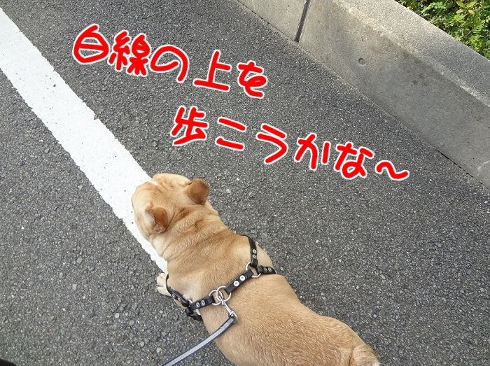 モグ散歩21