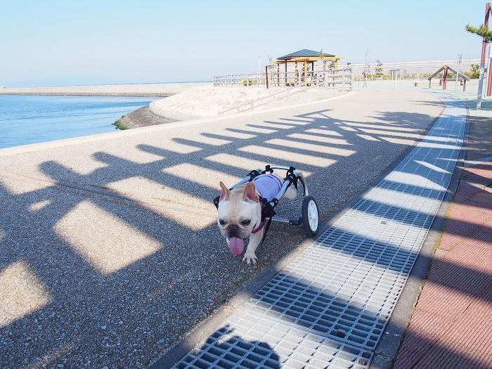 海公園散歩