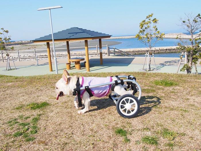 海公園散歩7