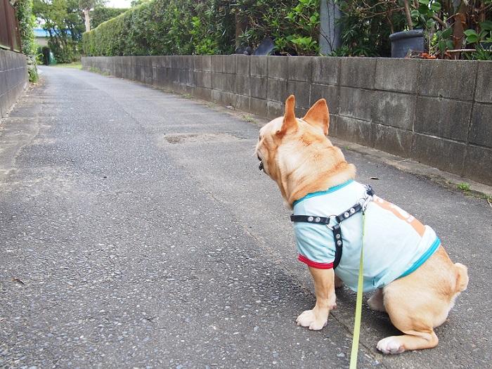 朝散歩20