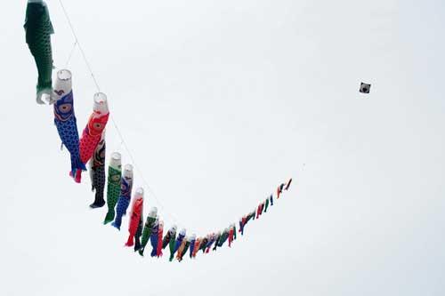 鯉のぼり凧揚げ2