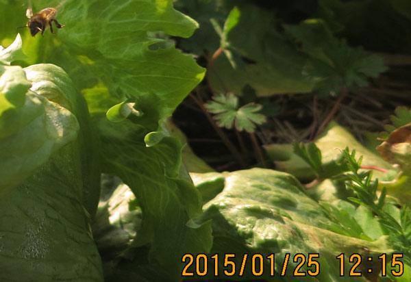 151cf20150125_12.jpg