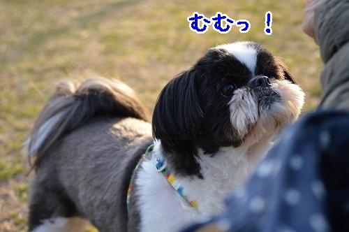 DSC_0036t_20150316162700d93.jpg