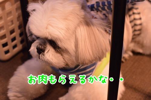 DSC_0063t.jpg