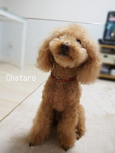 CHATARO.jpg