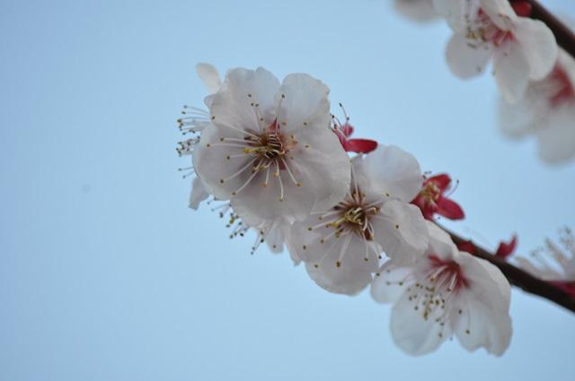 20150311花粉1