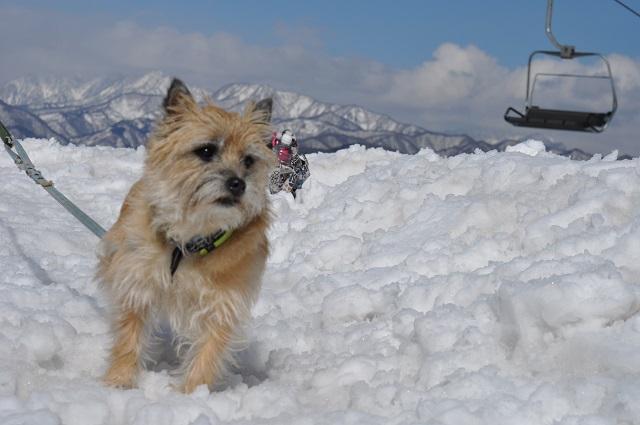 20150325雪遊び4