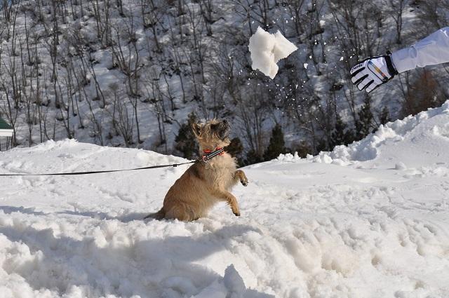20150325雪遊びキャン.3pg