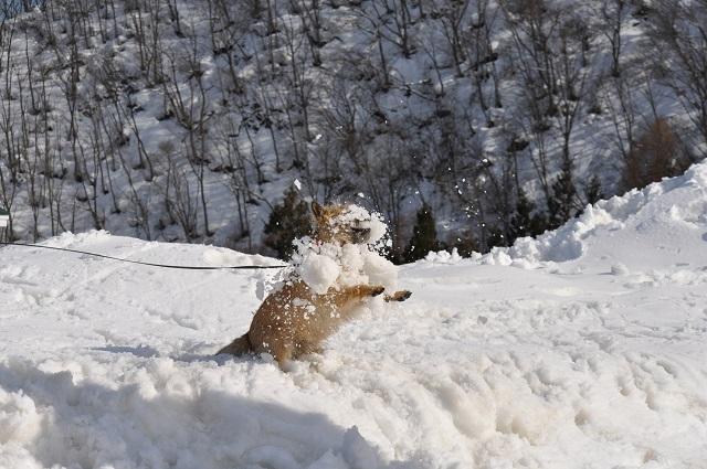20150325雪遊びキャン.4jpg