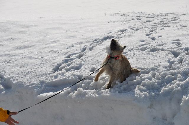 20150325雪遊びキャン