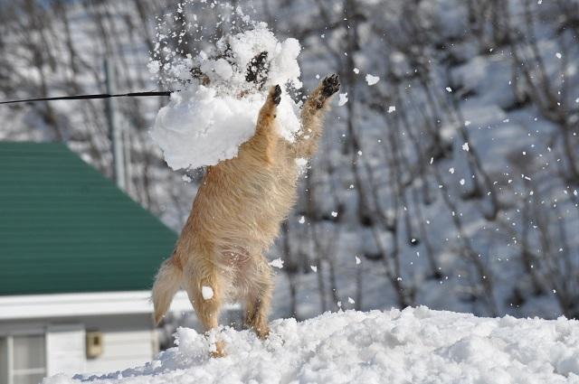20150325雪遊びキャン.9jpg