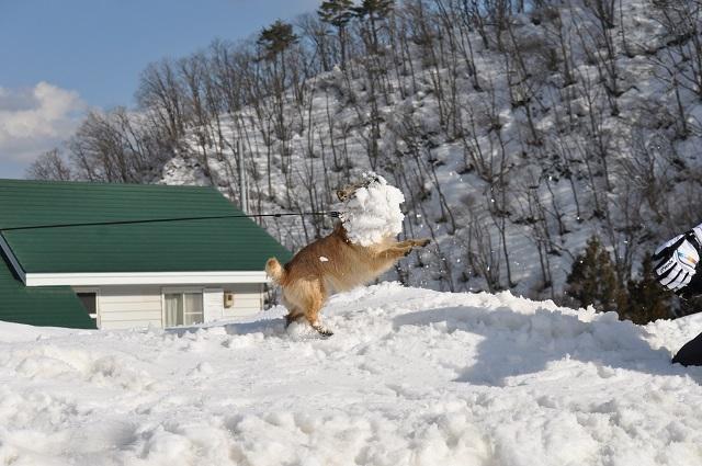 20150325雪遊びキャン.7jpg