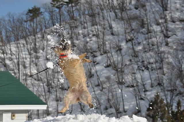 20150325雪遊びキャン.14jpg