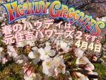 howdy0404sakura.jpg