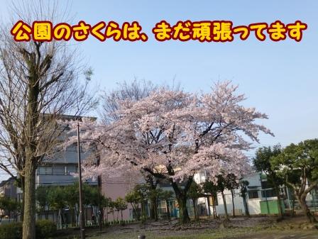 P1020736a.jpg