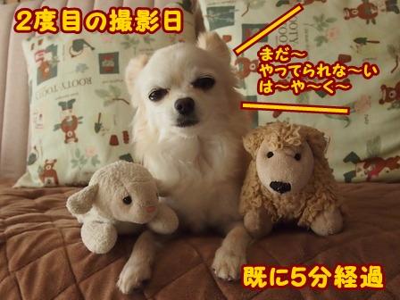 blog4946a.jpg
