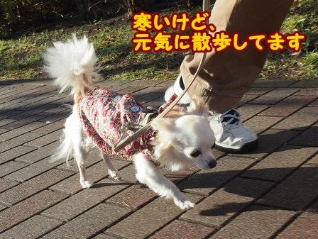 blog4981a.jpg