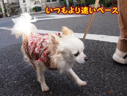 blog4988a.jpg