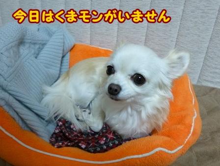 blog5161a.jpg