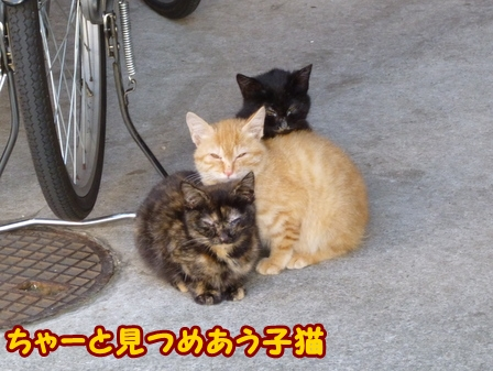 blog5347a.jpg