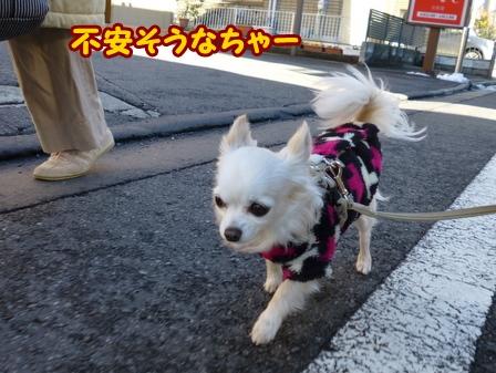 blog5381a.jpg