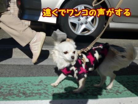 blog5382a.jpg