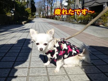 blog5383a.jpg