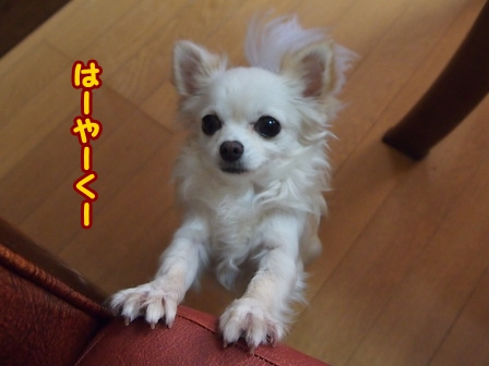 blog5394a.jpg