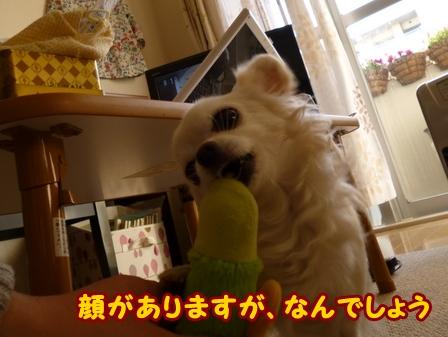blog5450a.jpg
