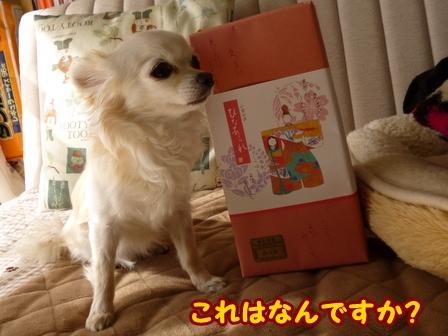blog5489a.jpg