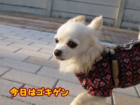 blog5546a.jpg
