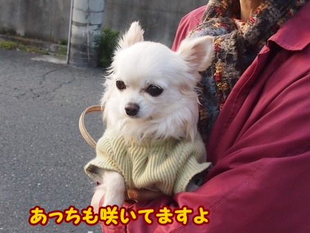 blog5648a.jpg