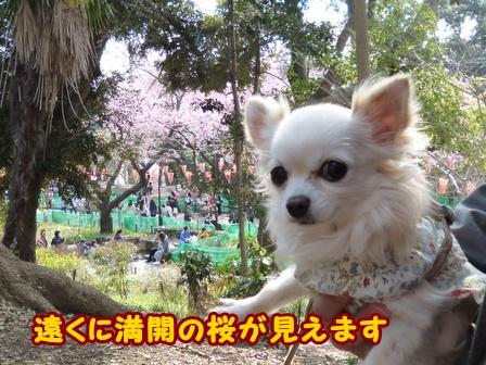 blog5683a.jpg