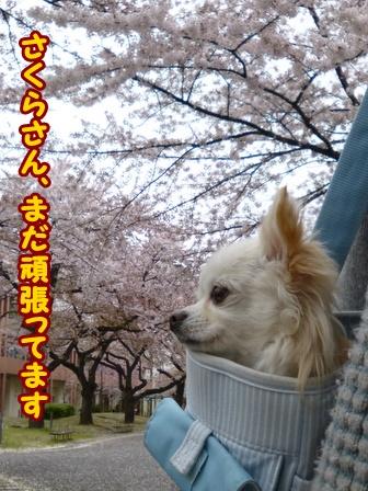 blog5743a.jpg