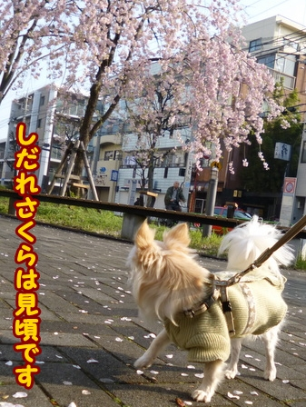 blog5750a.jpg