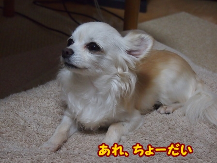 blog5783a.jpg