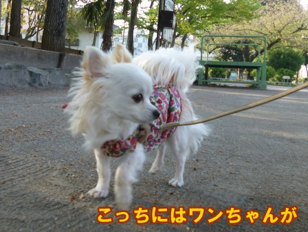 blog5797a.jpg