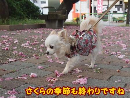 blog5851a.jpg