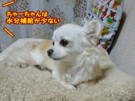 blog5905a.jpg