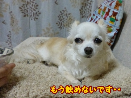 blog5906a.jpg