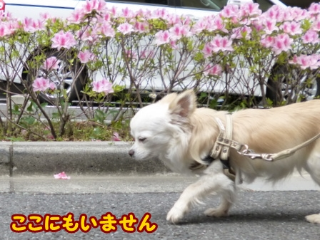 blog5935a.jpg