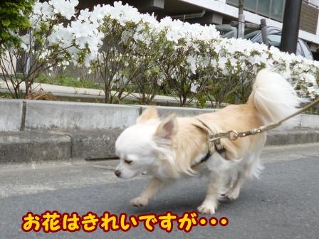 blog5936a.jpg