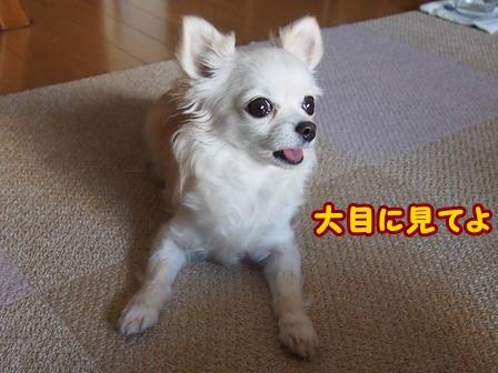 blog5964a.jpg