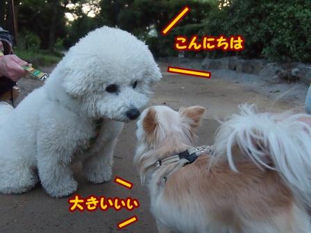 blog5975a.jpg