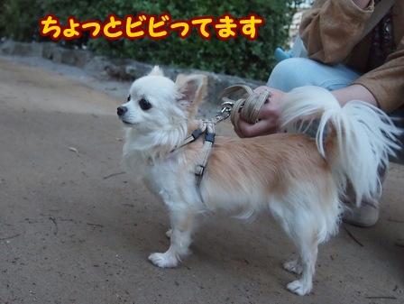 blog5977a.jpg