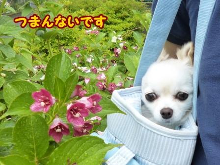 blog6018a.jpg
